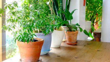 Beneficios de Plantar em Vasos