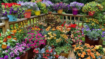 Como Cultivar um Jardim de Rosas em Vasos