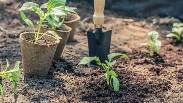 Cuidar de Mudas de Plantas Depois de Escolher