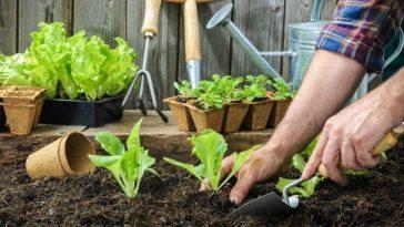 Dicas de Jardinagem Para Voce Fazer no Outono