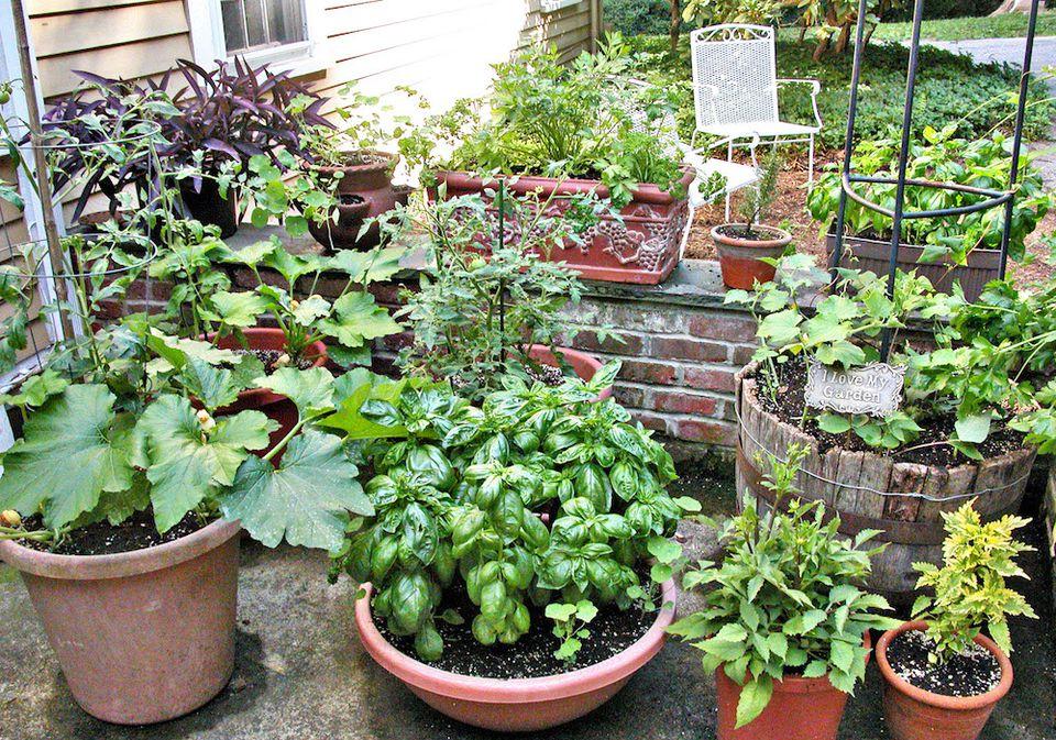 Os 10 Melhores Legumes Para Plantar em Vasos