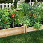 Os 6 Melhores Alimentos Para Cultivar em Casa