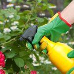 Receita Caseiro Para Eliminar as Pragas do Jardim