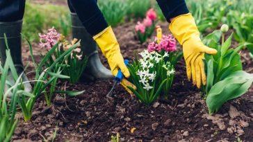 dicas de jardinagem