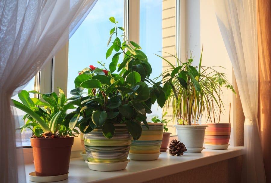 etapas para plantar legumes e erva no vaso