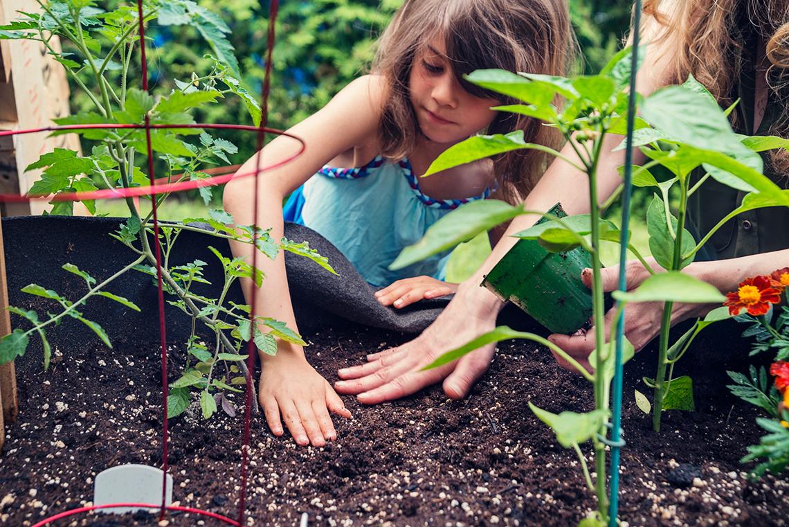 plantar legumes e erva no vaso