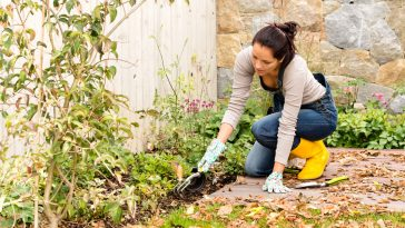regras para jardineiros